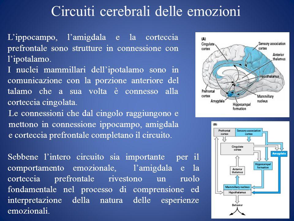 Circuiti cerebrali delle emozioni Lippocampo, lamigdala e la corteccia prefrontale sono strutture in connessione con lipotalamo. I nuclei mammillari d