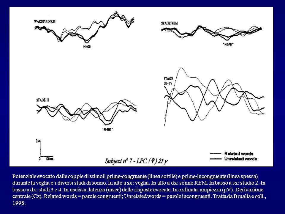 Potenziale evocato dalle coppie di stimoli prime-congruente (linea sottile) e prime-incongruente (linea spessa) durante la veglia e i diversi stadi di