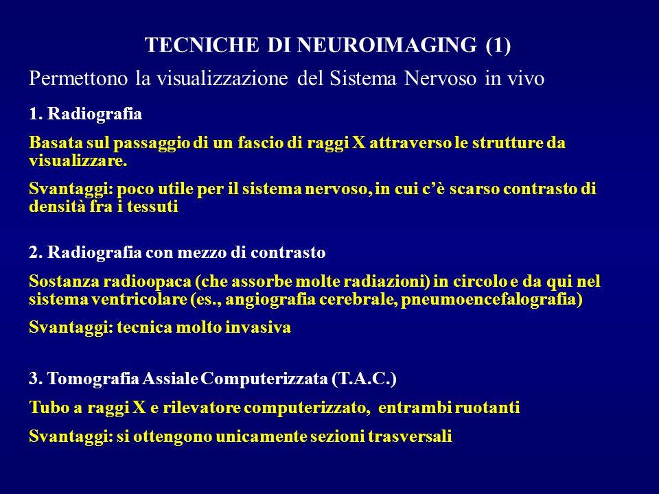 TECNICHE DI NEUROIMAGING (1) Permettono la visualizzazione del Sistema Nervoso in vivo 1. Radiografia Basata sul passaggio di un fascio di raggi X att