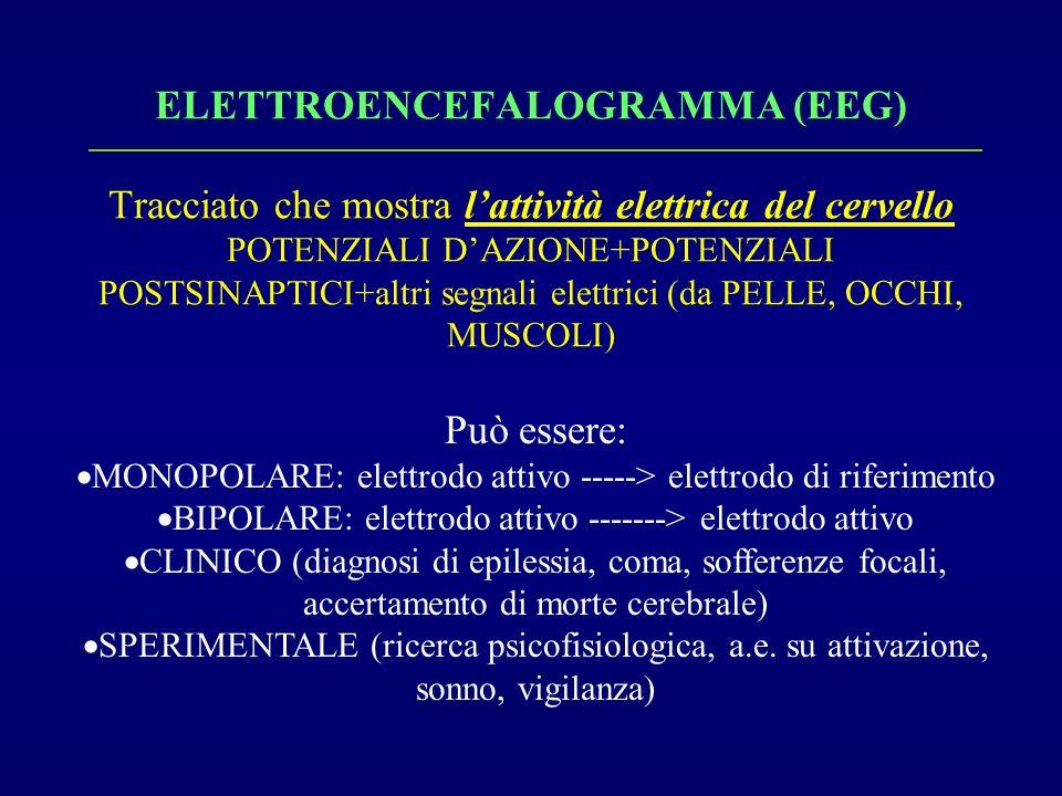 ELETTROENCEFALOGRAMMA (EEG) Tracciato che mostra lattività elettrica del cervello POTENZIALI DAZIONE+POTENZIALI POSTSINAPTICI+altri segnali elettrici