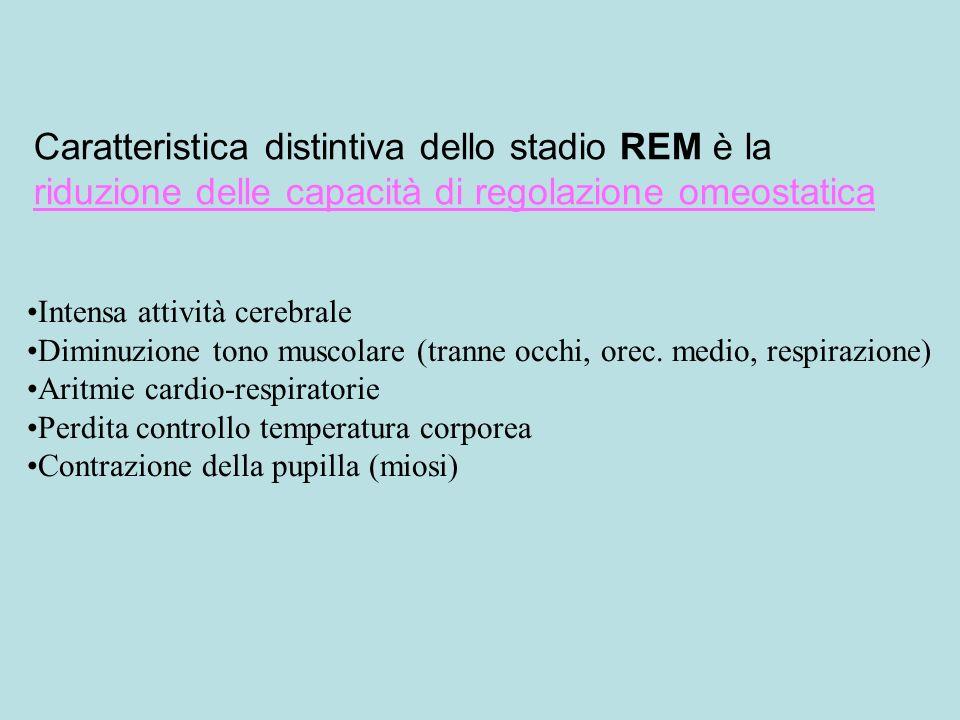 Caratteristica distintiva dello stadio REM è la riduzione delle capacità di regolazione omeostatica Intensa attività cerebrale Diminuzione tono muscolare (tranne occhi, orec.