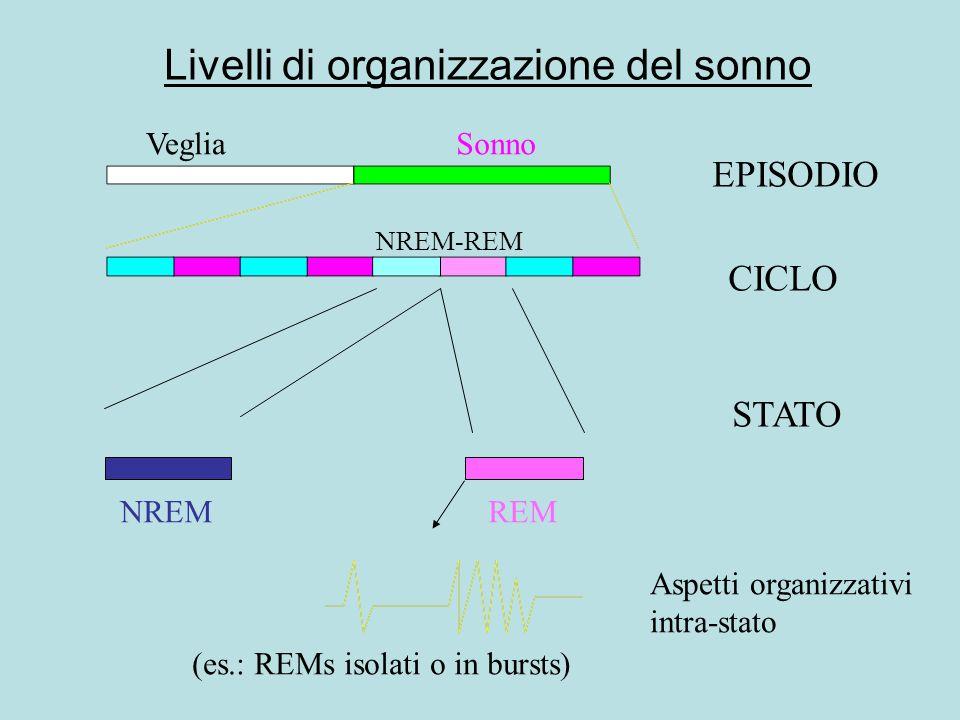 Livelli di organizzazione del sonno EPISODIO CICLO STATO Aspetti organizzativi intra-stato VegliaSonno NREMREM NREM-REM (es.: REMs isolati o in bursts)
