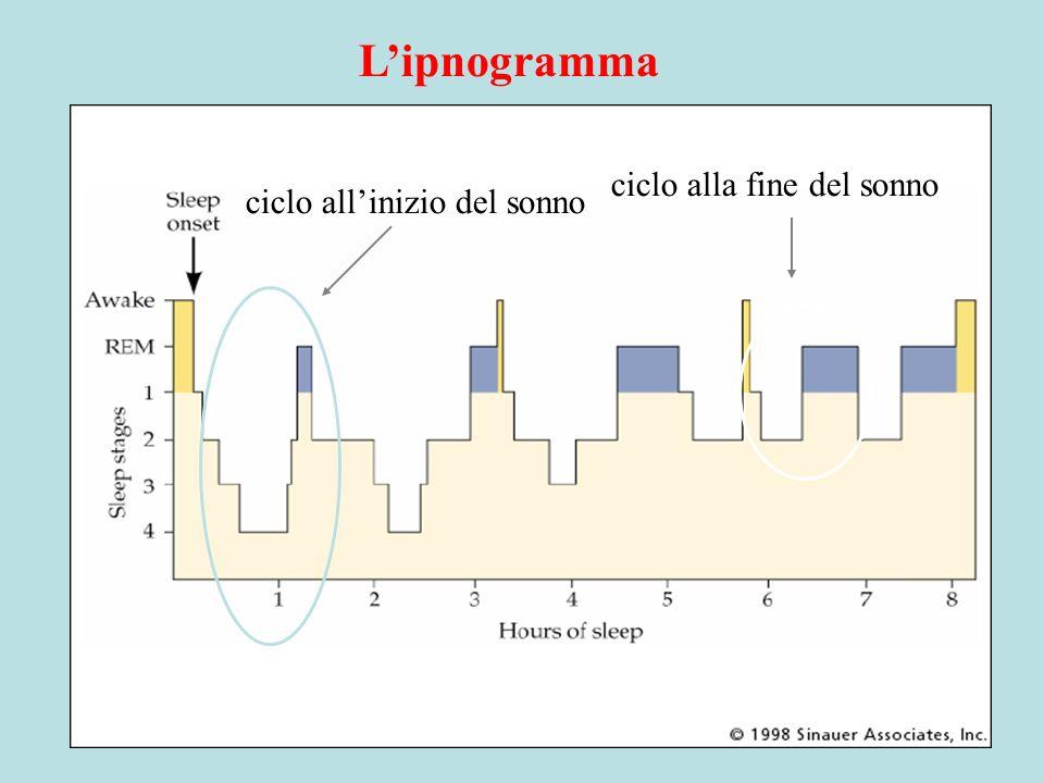 Lipnogramma ciclo allinizio del sonno ciclo alla fine del sonno
