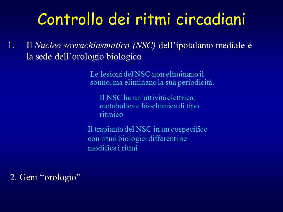 Controllo dei ritmi circadiani 1.Il Nucleo sovrachiasmatico (NSC) dellipotalamo mediale é la sede dellorologio biologico 2. Geni orologio Le lesioni d