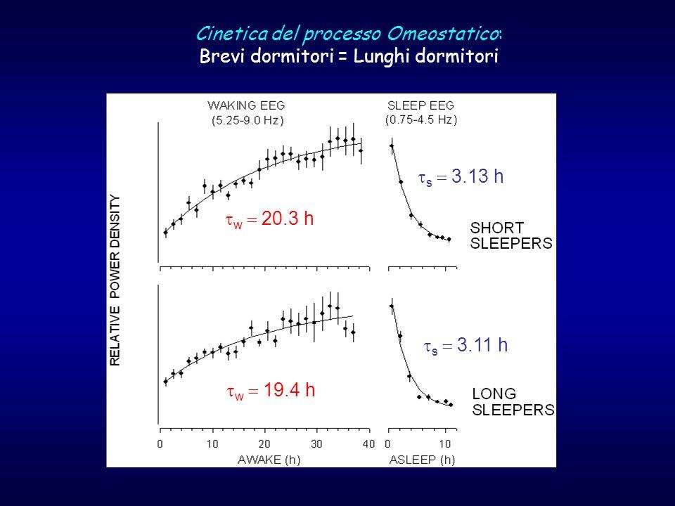 Cinetica del processo Omeostatico: Brevi dormitori = Lunghi dormitori w 20.3 h w 19.4 h s 3.11 h s 3.13 h