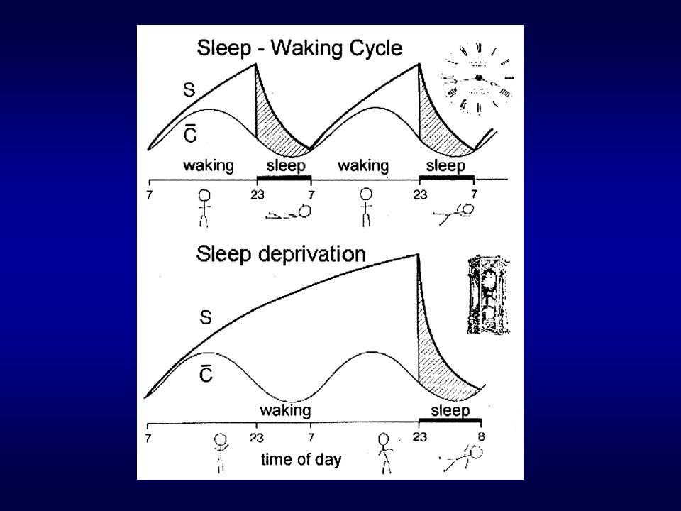 Differenze individuali nella regolazione del sonno? Brevi e lunghi dormitori Bambini Anziani