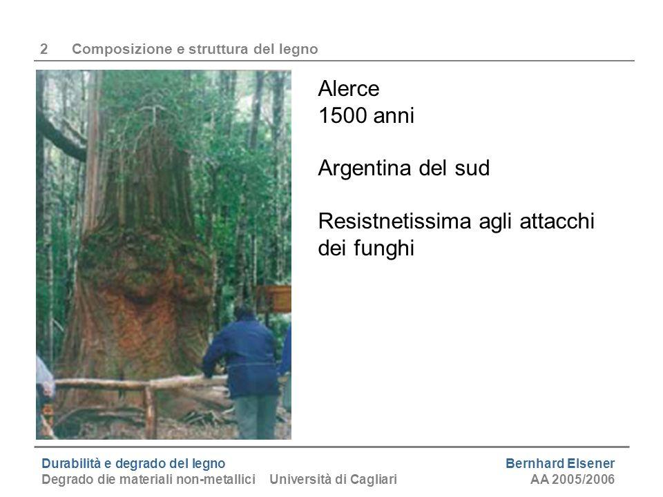 Durabilità e degrado del legno Bernhard Elsener Degrado die materiali non-metallici Università di CagliariAA 2005/2006 2Composizione e struttura del l
