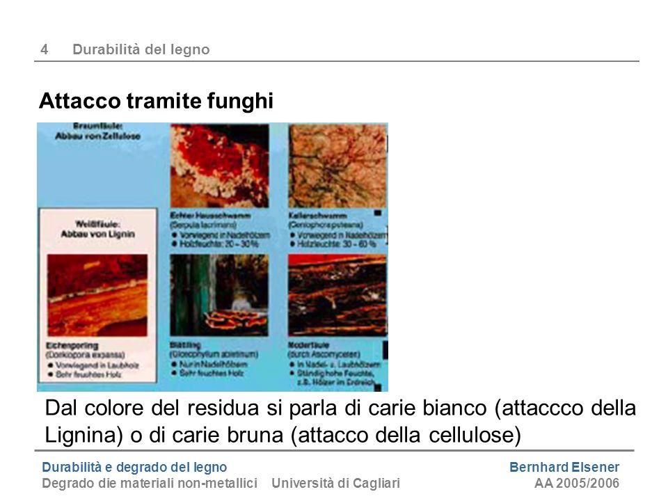 Durabilità e degrado del legno Bernhard Elsener Degrado die materiali non-metallici Università di CagliariAA 2005/2006 4Durabilità del legno Attacco t