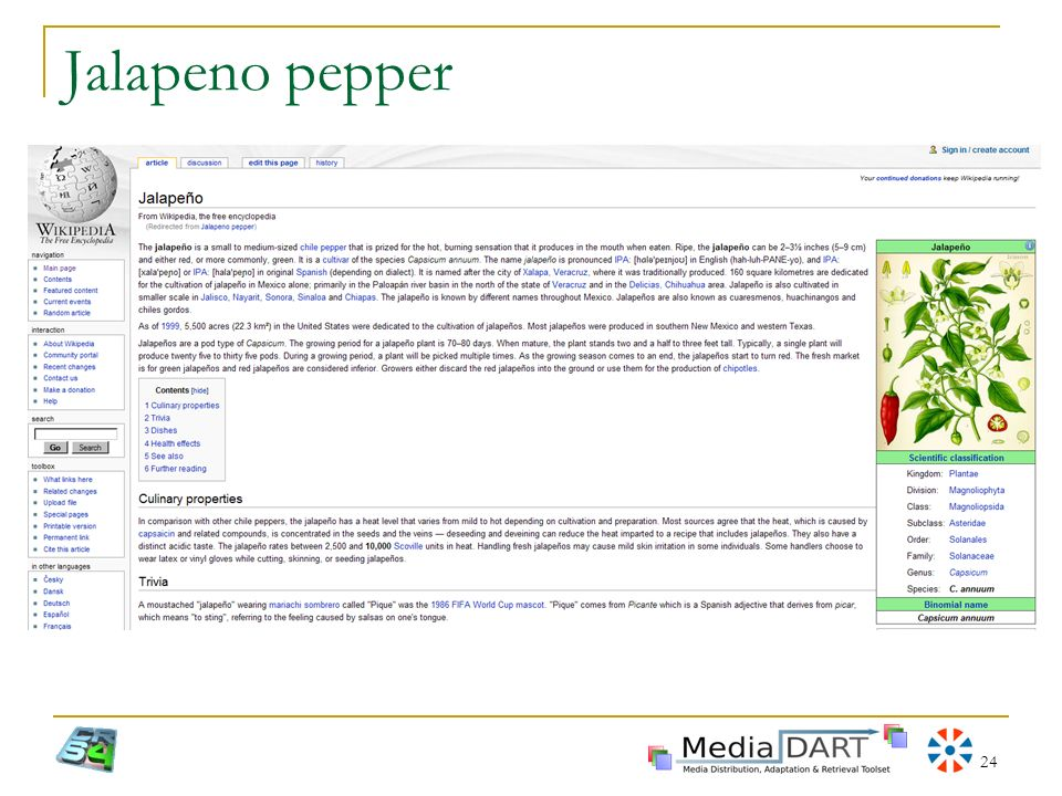 24 Jalapeno pepper