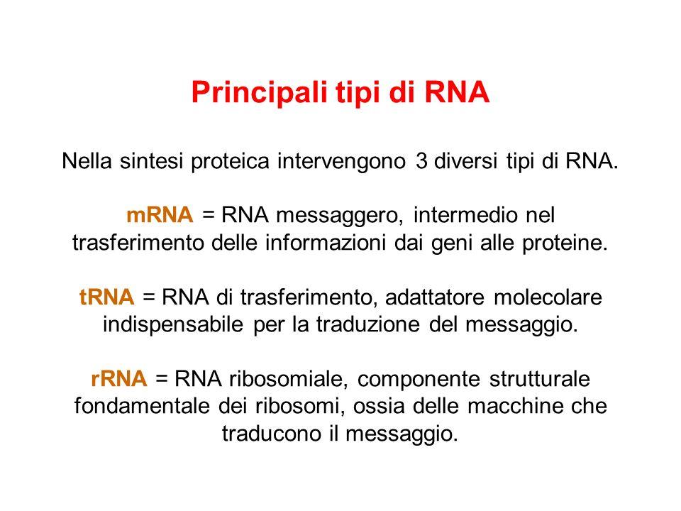 Il codice genetico è degenerato Il codice genetico si definisce degenerato in quanto più codoni possono codificare per uno stesso aminoacido. Le tripl
