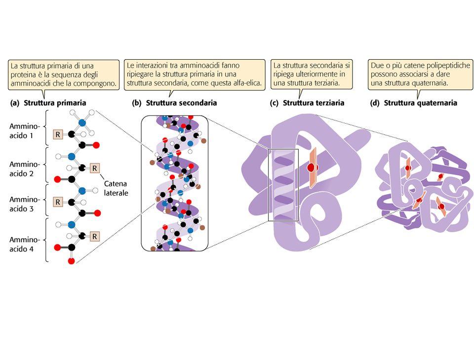 A G C TTC A A A T G C AA T TG T Template Strand Nucleus Cytoplasm U C G U U C A A A U C G U U C A A A mRNA