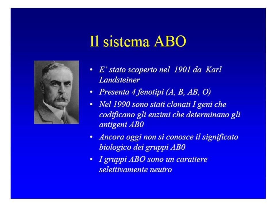 SISTEMA AB0 Landsteiner nel 1900 fece i primi esperimenti Mescolando emazie e siero dello stesso individuo ottenne: EMAZIE DISPERSE mescolando siero ed emazie di individui diversi ottenne: a) EMAZIE DISPERSE b) EMAZIE AGGLUTINATE EMAZIE -> ANTIGENI (AGGLUTINOGENI) A o B SIERO-> ANTICORPI (AGGLUTININE) Anti A Anti B Anti B