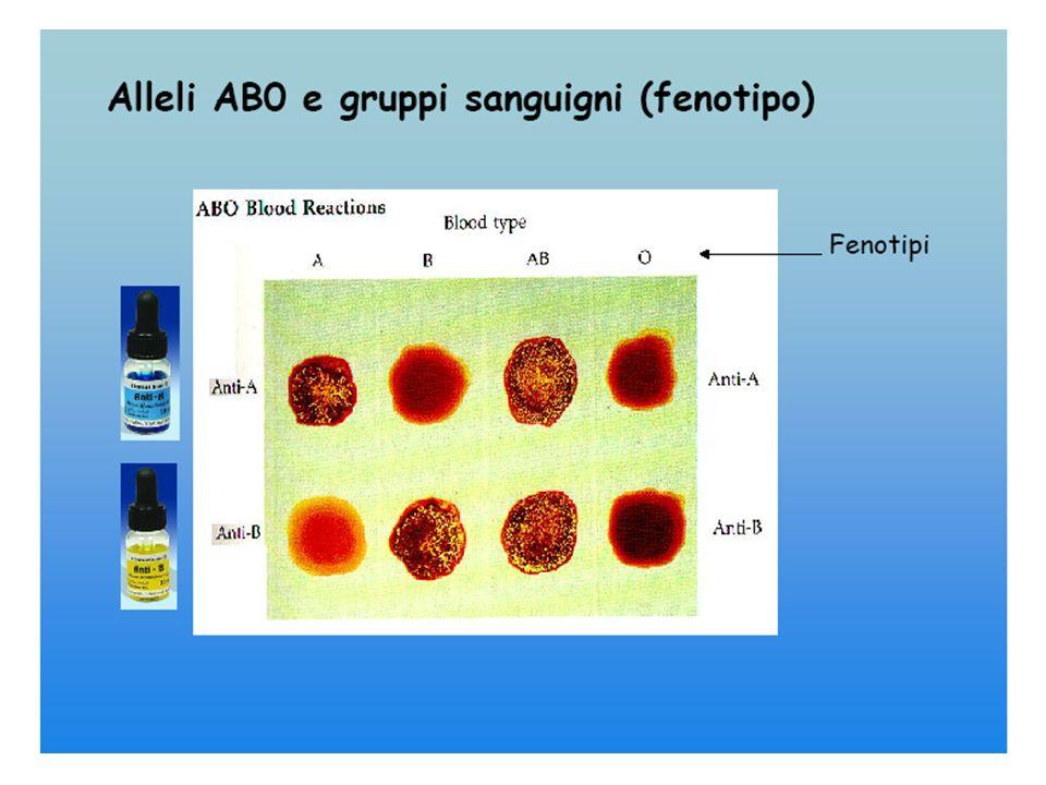 FENOTIPO AGGLUTINOGENO AGGLUTININA AAanti B BBanti A AB AB// 0(H)antiA-antiB Gruppo AB = Riceventi Universali Gruppo0 =Donatori Universali
