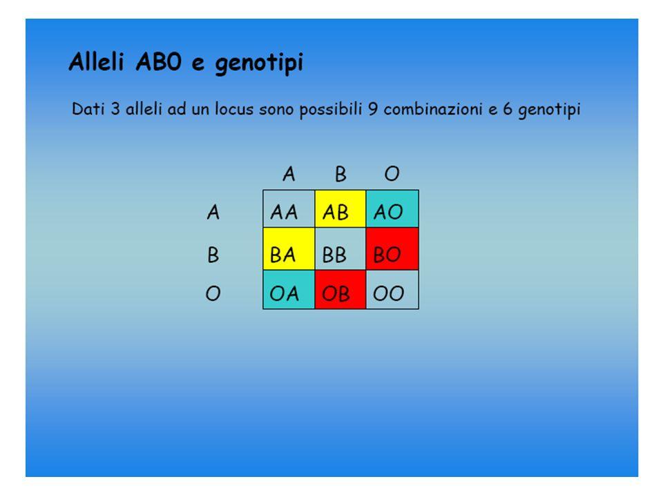 ERED ITAR IE TA SISTEMA POLIALLELICO = 3 ALLELI CODOMINANZA A e B RECESSIVITA 0 GENOTIPI FENOTIPI 0/0 0 A/0 A A/A B/0 B B/B A/B AB