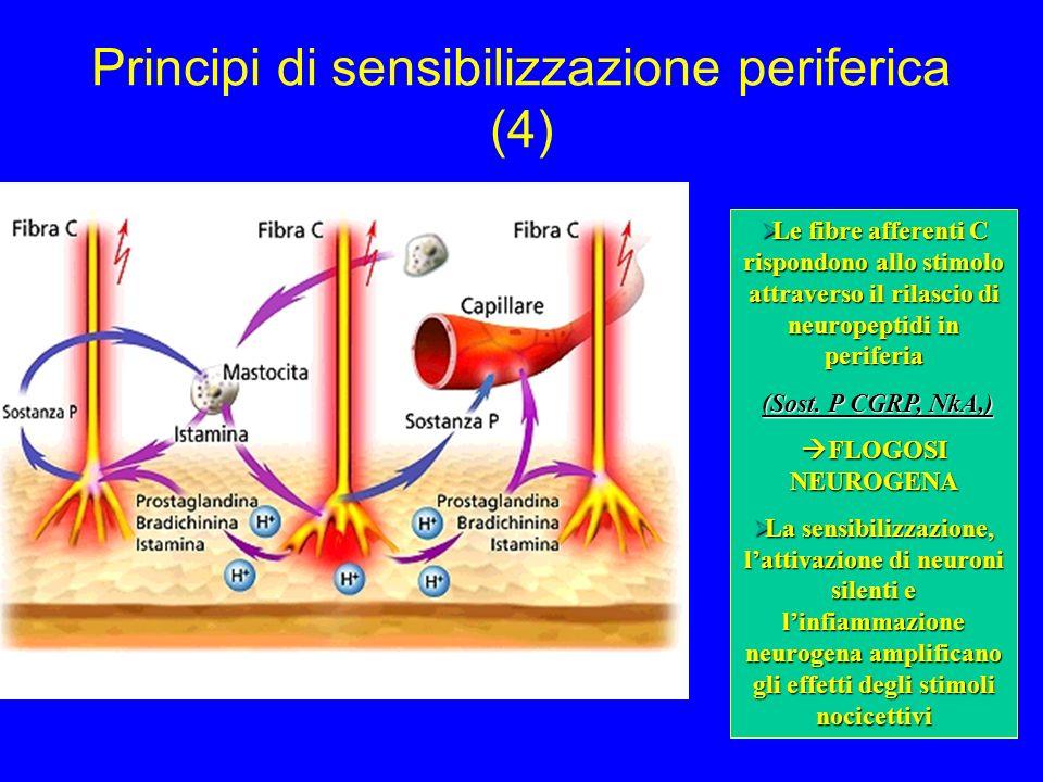 Principi di sensibilizzazione periferica (4) Le fibre afferenti C rispondono allo stimolo attraverso il rilascio di neuropeptidi in periferia Le fibre afferenti C rispondono allo stimolo attraverso il rilascio di neuropeptidi in periferia (Sost.