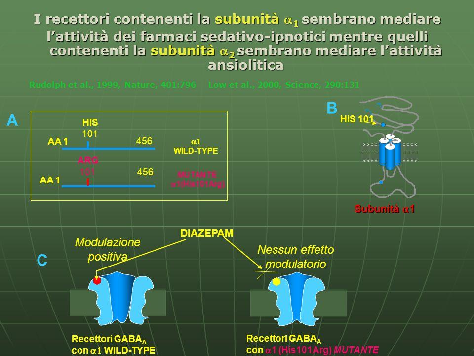 Recettori GABA A con WILD-TYPE Recettori GABA A con 1 (His101Arg) MUTANTE DIAZEPAM Modulazione positiva Nessun effetto modulatorio HIS 101 Subunità 1