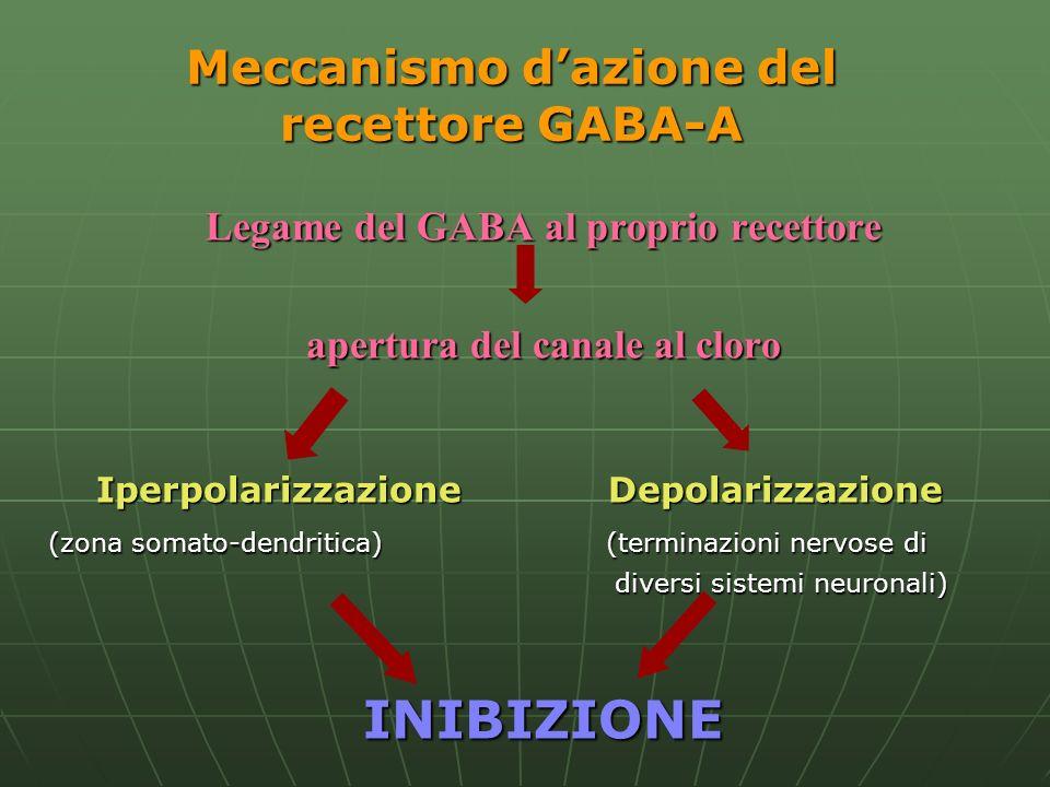 Meccanismo dazione del recettore GABA-A Legame del GABA al proprio recettore apertura del canale al cloro Iperpolarizzazione Depolarizzazione Iperpola