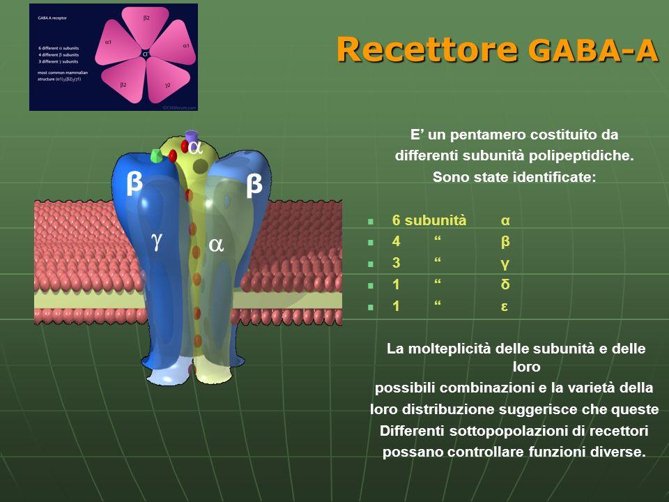 Recettore GABA-A β β E un pentamero costituito da differenti subunità polipeptidiche. Sono state identificate: 6 subunità α 4 β 3 γ 1 δ 1 ε La moltepl