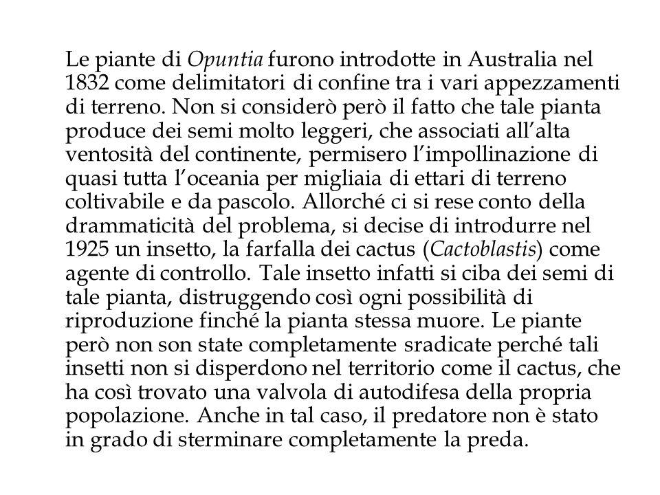Le piante di Opuntia furono introdotte in Australia nel 1832 come delimitatori di confine tra i vari appezzamenti di terreno.