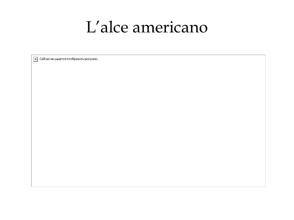 Lalce americano