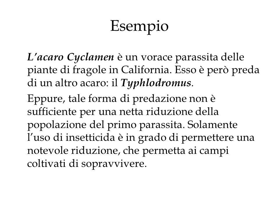 Esempio Lacaro Cyclamen è un vorace parassita delle piante di fragole in California. Esso è però preda di un altro acaro: il Typhlodromus. Eppure, tal