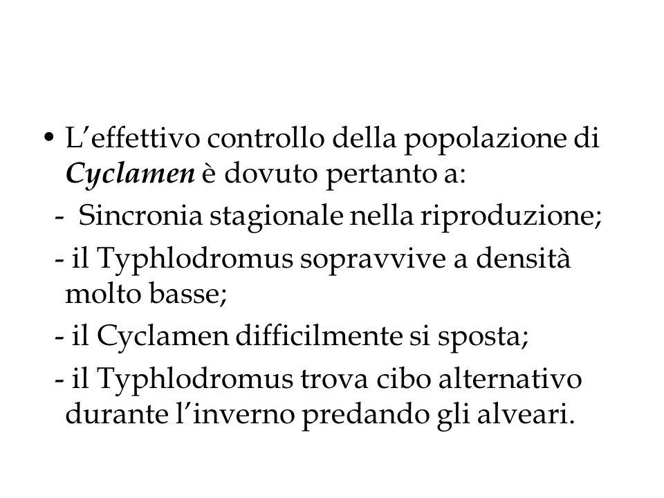 Leffettivo controllo della popolazione di Cyclamen è dovuto pertanto a: - Sincronia stagionale nella riproduzione; - il Typhlodromus sopravvive a densità molto basse; - il Cyclamen difficilmente si sposta; - il Typhlodromus trova cibo alternativo durante linverno predando gli alveari.