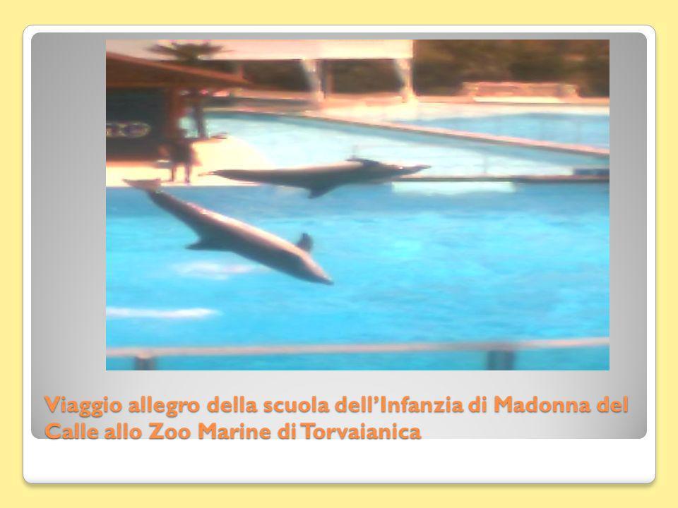 Viaggio allegro della scuola dellInfanzia di Madonna del Calle allo Zoo Marine di Torvaianica