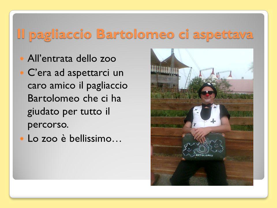Il pagliaccio Bartolomeo ci aspettava Allentrata dello zoo Cera ad aspettarci un caro amico il pagliaccio Bartolomeo che ci ha giudato per tutto il percorso.