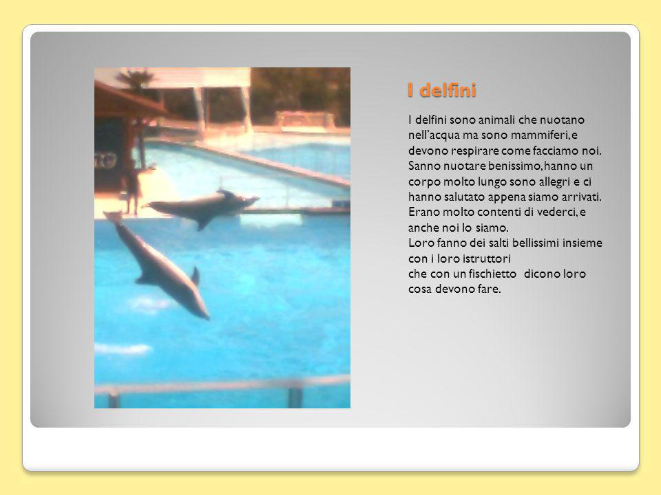 I delfini I delfini sono animali che nuotano nellacqua ma sono mammiferi, e devono respirare come facciamo noi.