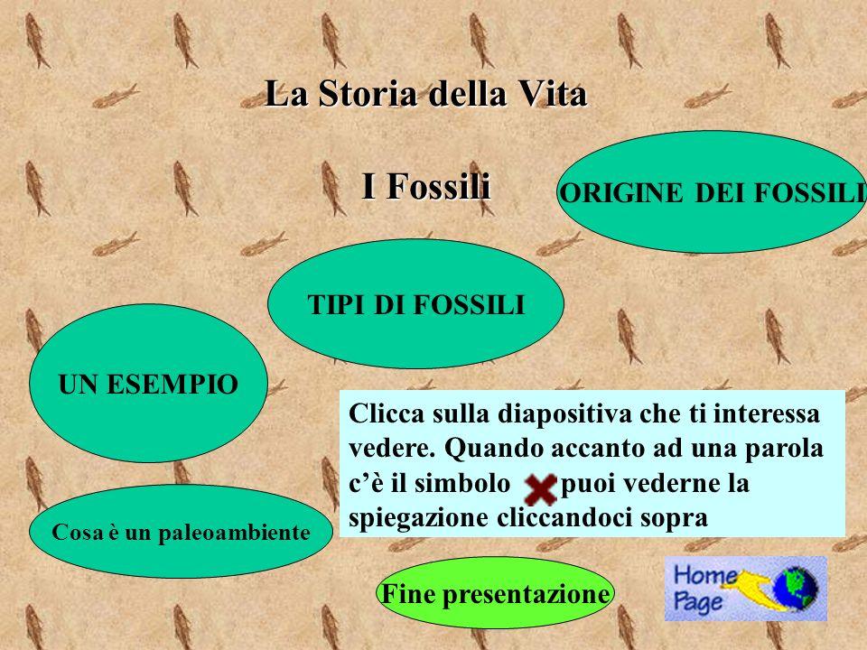 La Storia della Vita I Fossili UN ESEMPIO ORIGINE DEI FOSSILI TIPI DI FOSSILI Clicca sulla diapositiva che ti interessa vedere. Quando accanto ad una