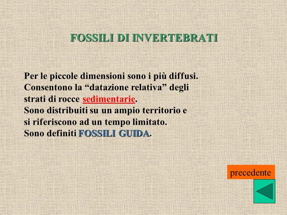 FOSSILI DI INVERTEBRATI Per le piccole dimensioni sono i più diffusi. Consentono la datazione relativa degli strati di rocce sedimentarie.sedimentarie