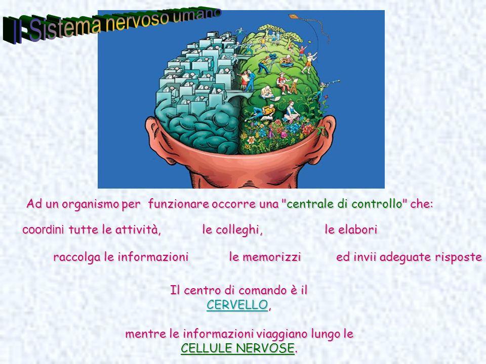 Il centro di comando è il CERVELLOCERVELLO, CERVELLO mentre le informazioni viaggiano lungo le CELLULE NERVOSE. Ad un organismo per funzionare occorre