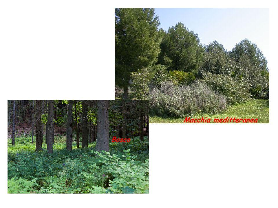 Forme delle radici più comuni A fittone: da una radice principale si sviluppano radici più piccole (es.