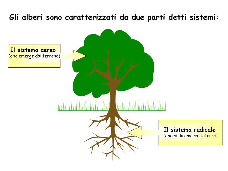 Gli alberi sono caratterizzati da due parti detti sistemi: Il sistema aereo (che emerge dal terreno) Il sistema radicale (che si dirama sottoterra)