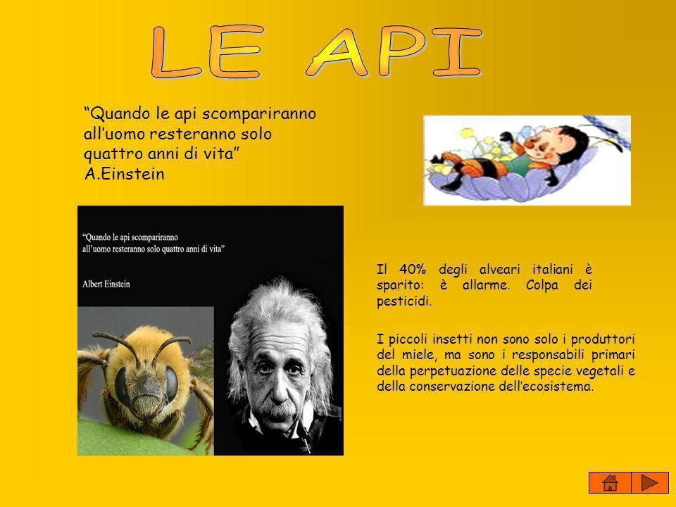 Quando le api scompariranno alluomo resteranno solo quattro anni di vita A.Einstein Il 40% degli alveari italiani è sparito: è allarme. Colpa dei pest