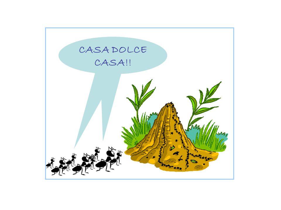 CASA DOLCE CASA!!