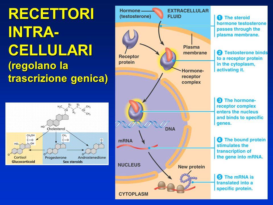 RECETTORIINTRA-CELLULARI (regolano la trascrizione genica)