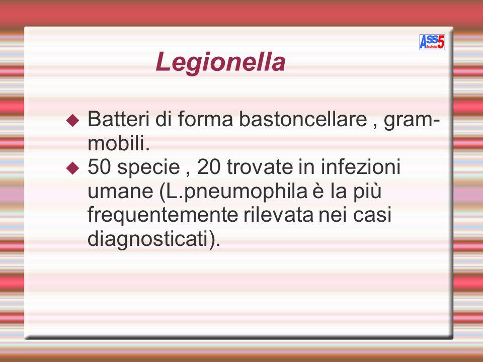Legionella Batteri di forma bastoncellare, gram- mobili. 50 specie, 20 trovate in infezioni umane (L.pneumophila è la più frequentemente rilevata nei