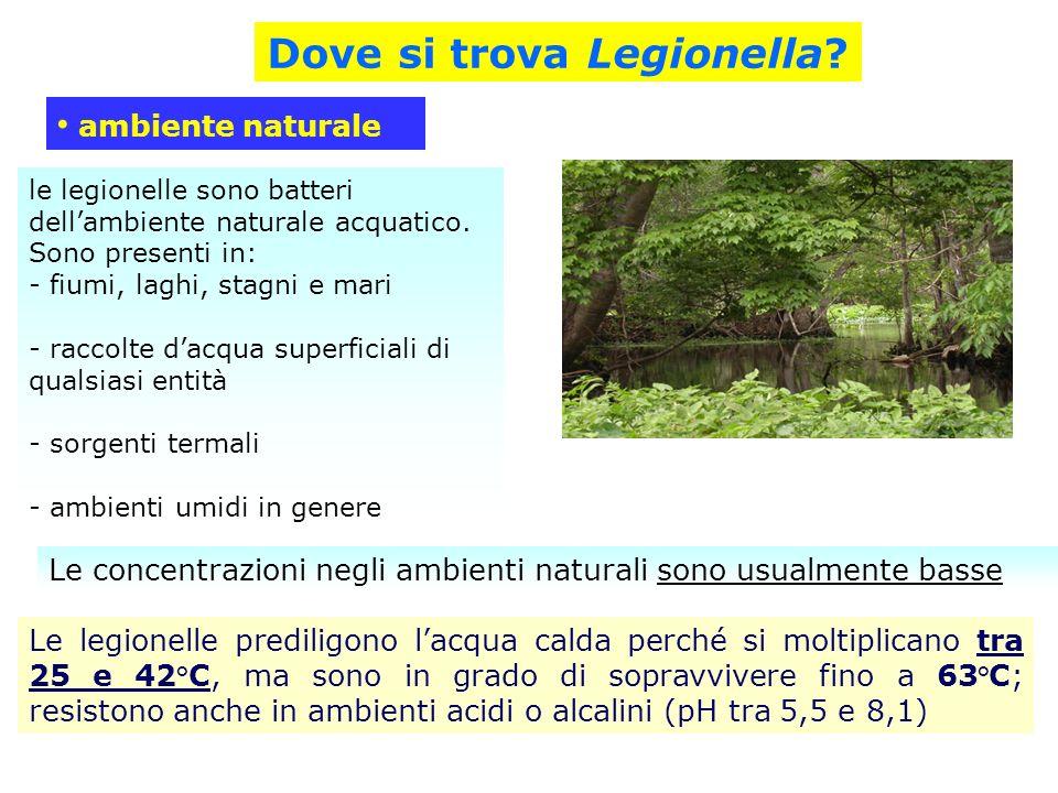 le legionelle sono batteri dellambiente naturale acquatico. Sono presenti in: - fiumi, laghi, stagni e mari - raccolte dacqua superficiali di qualsias