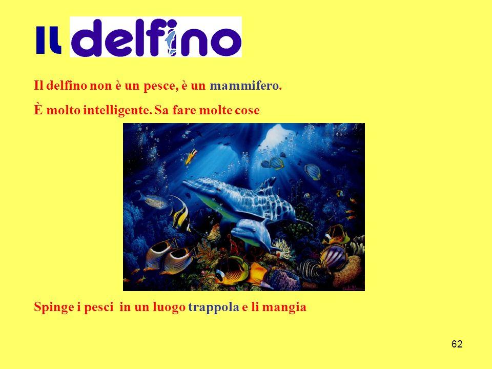 62 IL Il delfino non è un pesce, è un mammifero. È molto intelligente. Sa fare molte cose Spinge i pesci in un luogo trappola e li mangia
