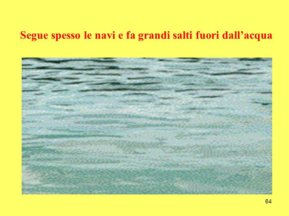 64 Segue spesso le navi e fa grandi salti fuori dallacqua