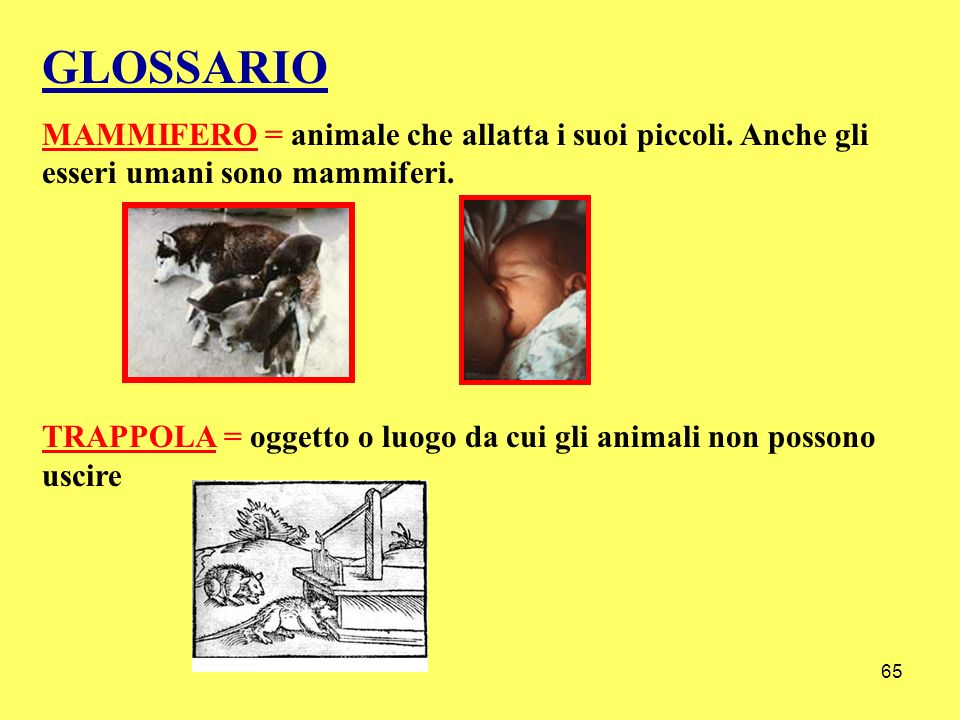 65 GLOSSARIO MAMMIFERO = animale che allatta i suoi piccoli. Anche gli esseri umani sono mammiferi. TRAPPOLA = oggetto o luogo da cui gli animali non