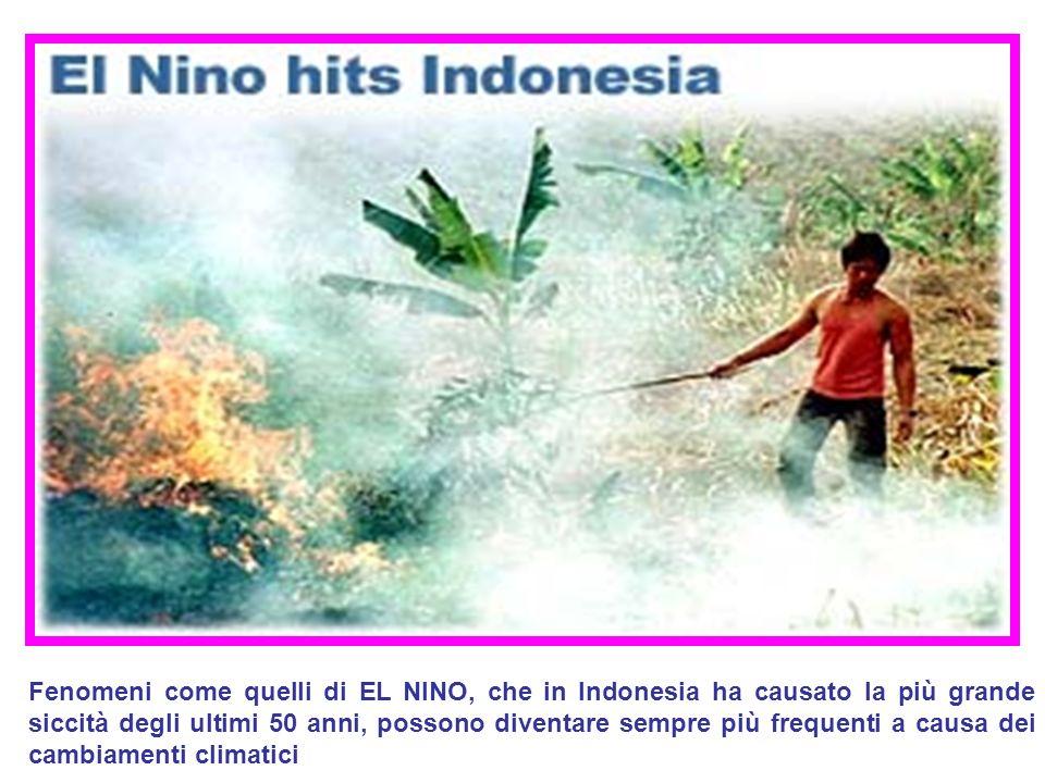 Fenomeni come quelli di EL NINO, che in Indonesia ha causato la più grande siccità degli ultimi 50 anni, possono diventare sempre più frequenti a caus