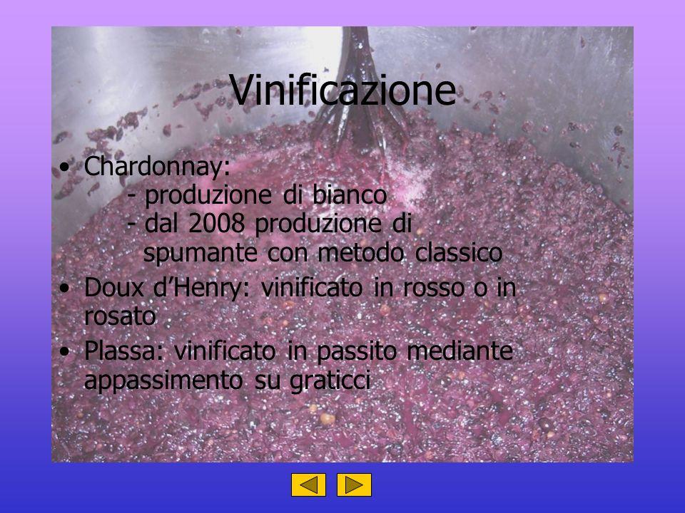 Vinificazione Chardonnay: - produzione di bianco - dal 2008 produzione di spumante con metodo classico Doux dHenry: vinificato in rosso o in rosato Pl