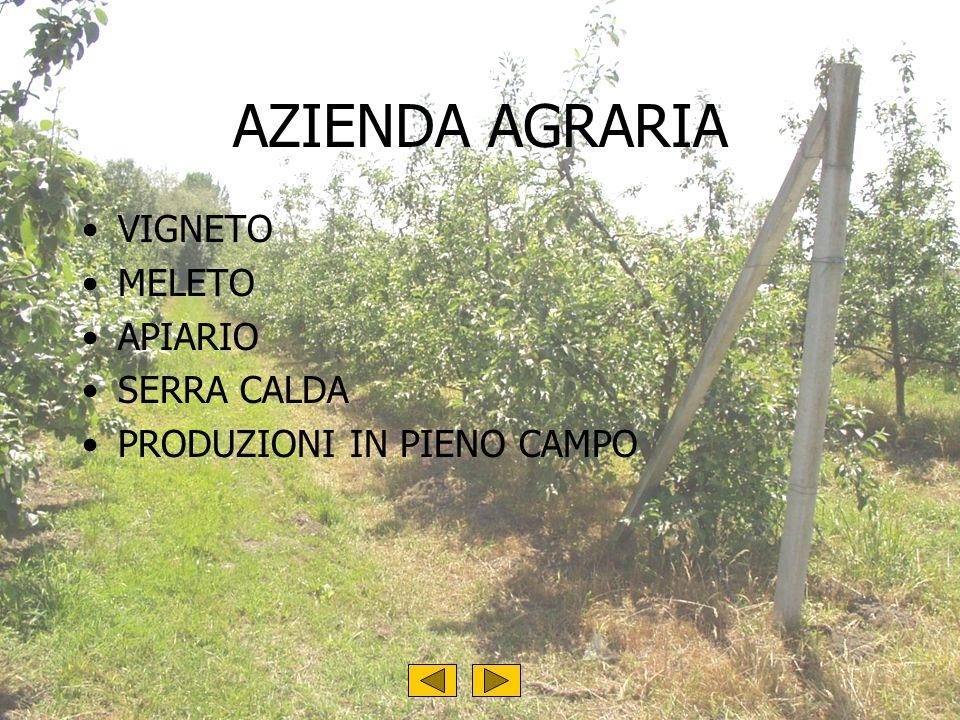 AZIENDA AGRARIA VIGNETO MELETO APIARIO SERRA CALDA PRODUZIONI IN PIENO CAMPO....