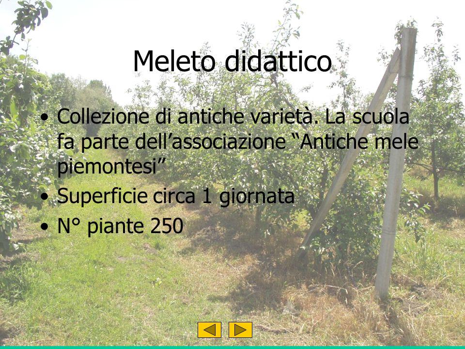 Meleto didattico Collezione di antiche varietà.