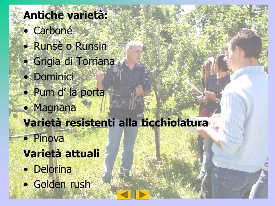 Antiche varietà: Carboné Runsè o Runsin Grigia di Torriana Dominici Pum d la porta Magnana Varietà resistenti alla ticchiolatura Pinova Varietà attuali Delorina Golden rush