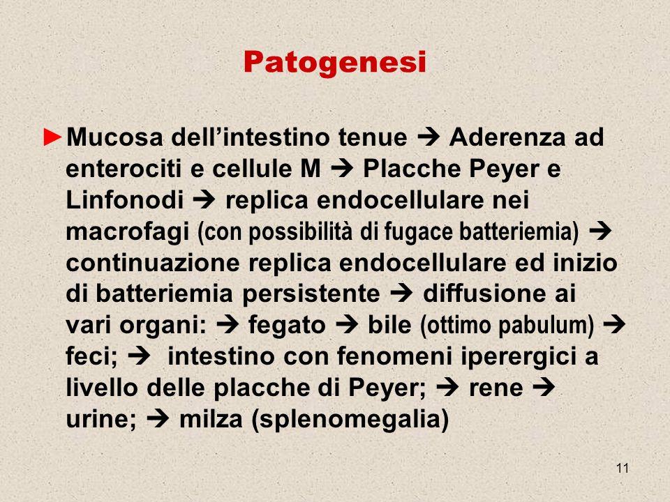 11 Patogenesi Mucosa dellintestino tenue Aderenza ad enterociti e cellule M Placche Peyer e Linfonodi replica endocellulare nei macrofagi (con possibi