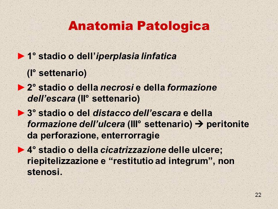 22 Anatomia Patologica 1° stadio o delliperplasia linfatica (I° settenario) 2° stadio o della necrosi e della formazione dellescara (II° settenario) 3