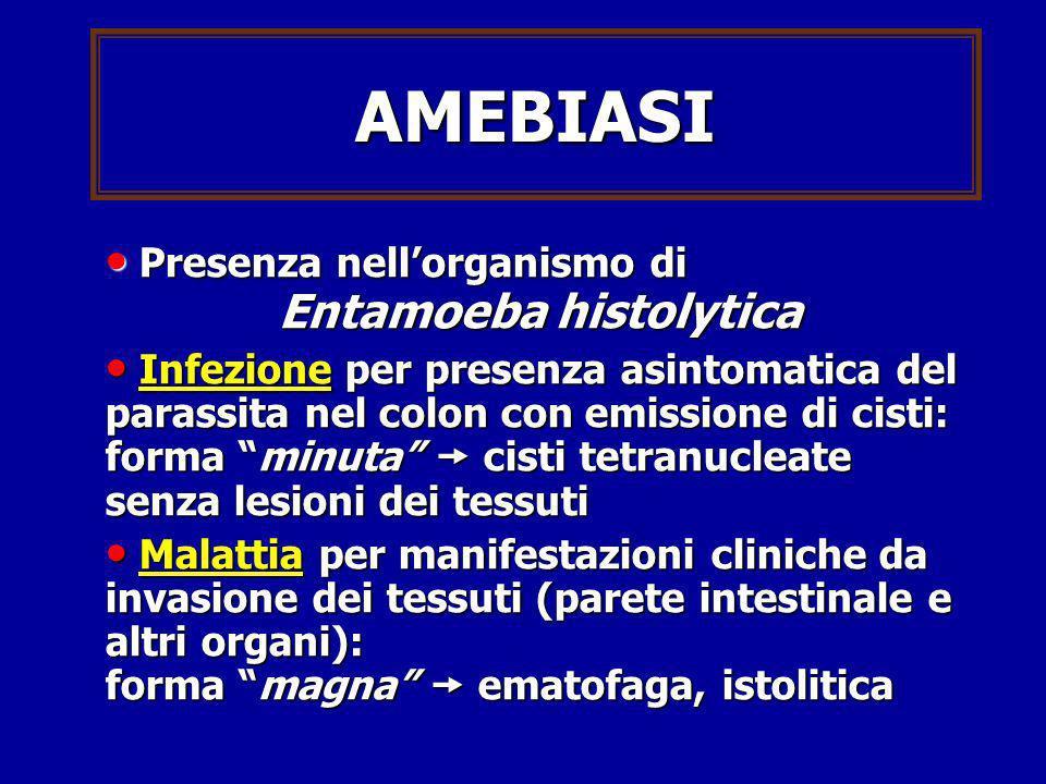 AMEBIASI Presenza nellorganismo di Presenza nellorganismo di Entamoeba histolytica Infezione per presenza asintomatica del parassita nel colon con emi